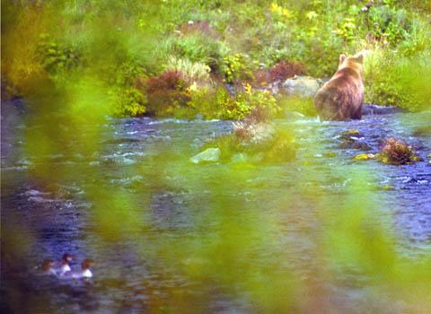 bear-away.jpg