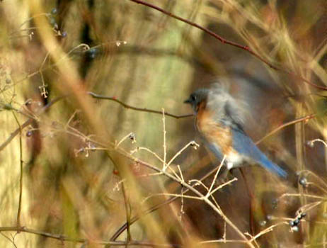 Bluebird takeoff