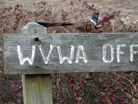 Miniature Ring-necked Pheasant on WVWA Sign
