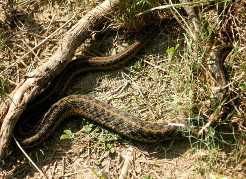 snake-rescue1.jpg