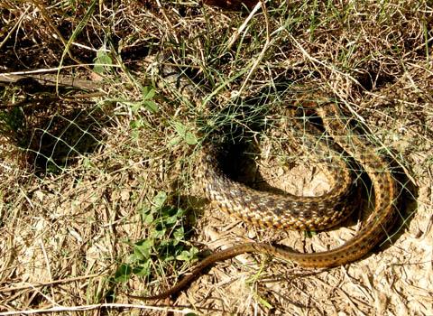 snake-rescue2.jpg